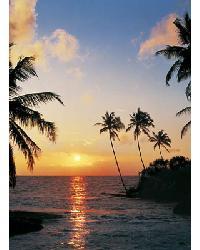 366 Tropical Sundown by