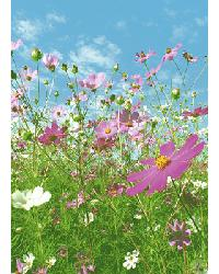 367 Flower Meadow by