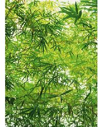 372 Bamboo by