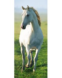 514 White Horse by
