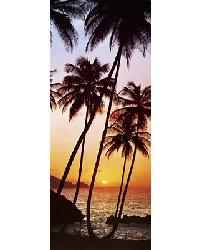 529 Sunny Palms by