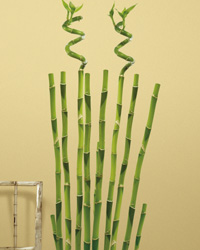 Bamboo Peel  Stick Wall Decals RMK1166GM by