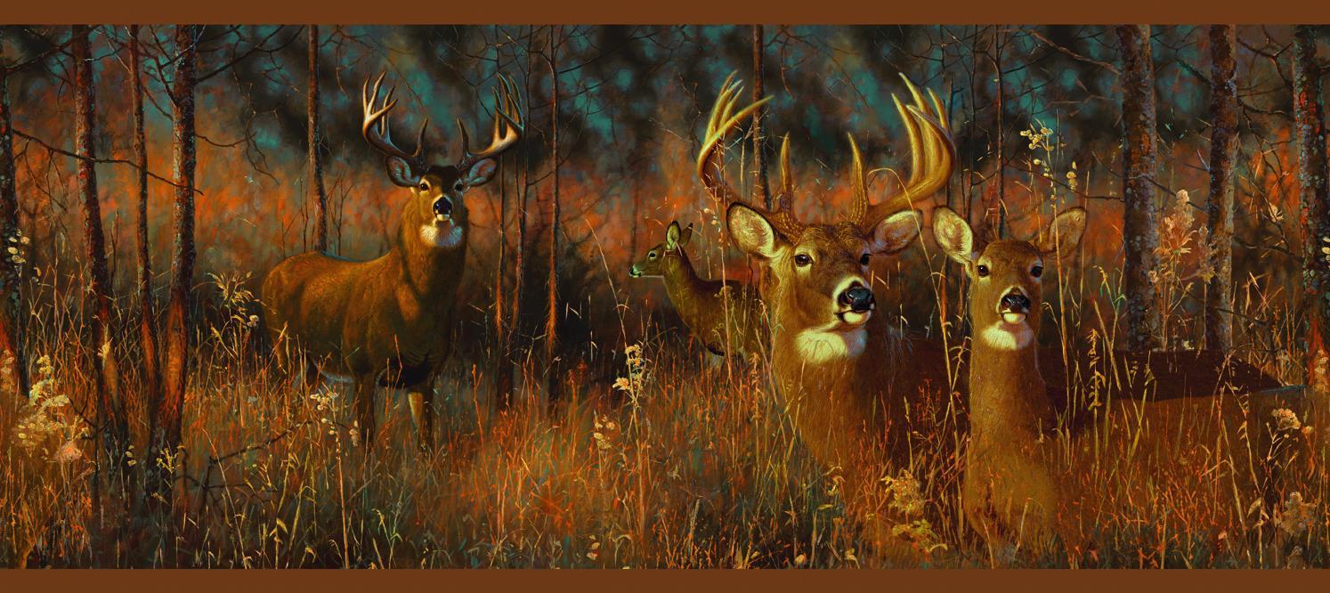 pics photos wallpapers whitetail deer wallpaper snow