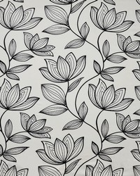 Dahlia 309 Lily by