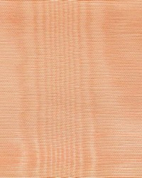 CROWN MOIRE SHRIMP by