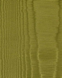 CROWN MOIRE EVERGREEN by