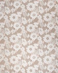 Botanical Studio Fabric Fabricut Fabrics Elba Cameo
