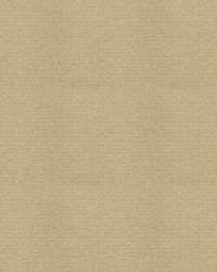 Thoth Beige by