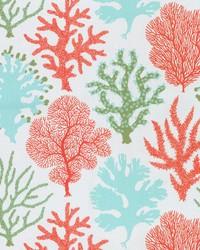 OD Coral Study Carib by