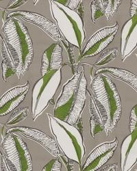 OD Jungle Jive Palm by