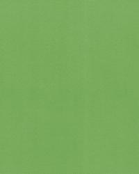 OD Radiance Gecko by