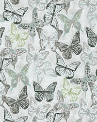P K Lifestyles Social Butterfly Shell Fabric