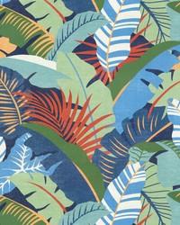 Palma Linda Mangrove by