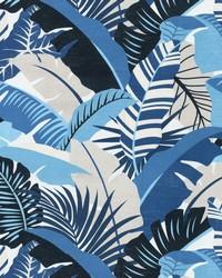 Palma Linda Azul by