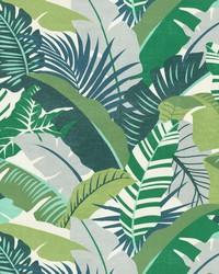 Palma Linda Verde by