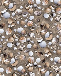 Sea Shell Adhesive Film by  Brewster Wallcovering