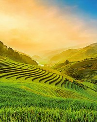 Terraced Rice Field In Vietnam Wall Mural by