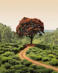 Red Tree And Hills In Sri Lanka Wall Mural by