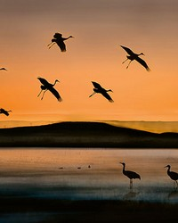 Birds At Sunset Wall Mural by