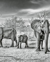 Elephant Family Wall Mural by