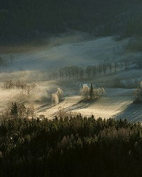 Frosty Forest With Dew Wall Mural by