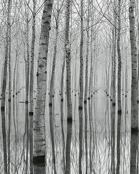 Birch Forest In The Water Wall Mural by