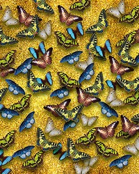 Multicolored Butterfly Mural Wall Mural by