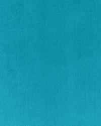 Palias Bluebird by