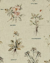 BOTANIST F0865/01 CAC LINEN by