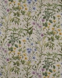 BUTTERCUP F1146/01 CAC LINEN by
