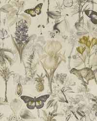 BOTANY F1297/01 CAC CHARCOAL/CHARTREUSE by
