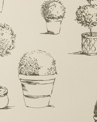 Topiary Wp Charcoal by  Clarke and Clarke Wallpaper