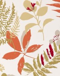 W0047 Spice Wallpaper by  Clarke and Clarke Wallpaper