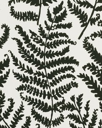 Wild Fern Wp Charcoal Wp by  Clarke and Clarke Wallpaper