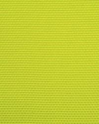 Salt Marsh Lime by