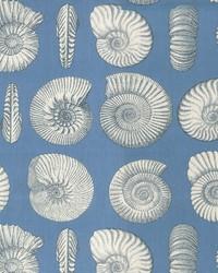 Nautilus Indigo by