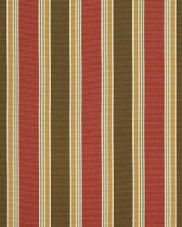 Chicora Stripe Rose by
