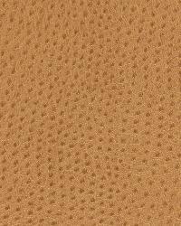Dongary Camel by  Robert Allen