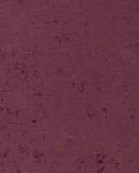 D1914 Violet by