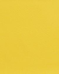 V142 Canary by