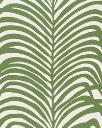 Zebra Palm Jungle by