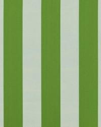 Green Wide Stripe Fabric  SD polo Stripe 251 Island Green