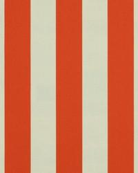 Orange Wide Stripe Fabric  SD polo Stripe 321 Tangerine