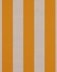 Yellow Wide Stripe Fabric  SD polo Stripe 885 Sunshine
