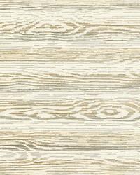 Muir Woods Birch by