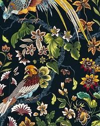 Botany Bay Black Ruby by