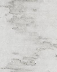 Polar Bear Greige by