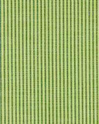 Tisbury Stripe Fern by