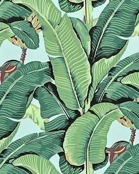 Hinson Palm Sky by