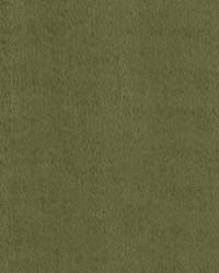 Berwick Moss by